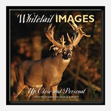 Whitetail Images: Up Close and Personal 1314551122