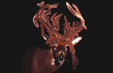 2002 Cowinner: The Troy Wilson Buck