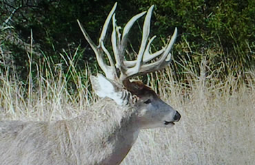 Finally, a Buck with a Name