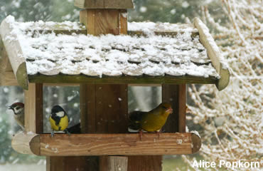 120 years of conservation history lives with the annual Christmas Bird Count