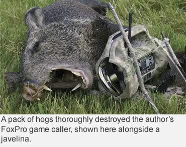 Smokin' White-Hot Hogs